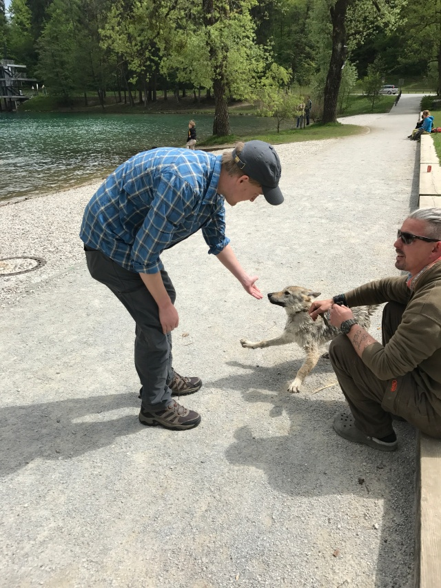 Lake Bled - J playing with wolf